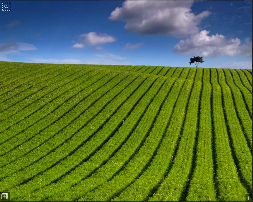 bing green crops